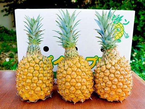 【 九旬直送便 】<br>沖縄・石垣島 スナックパイン3個セット