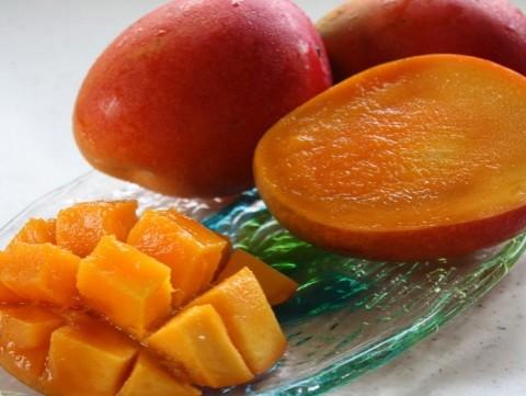 沖縄やんばる わけありマンゴー2kg 【8月上旬より出荷】