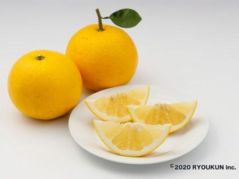 宮崎・日南「緑の里りょうくん」樹上完熟グレープフルーツ