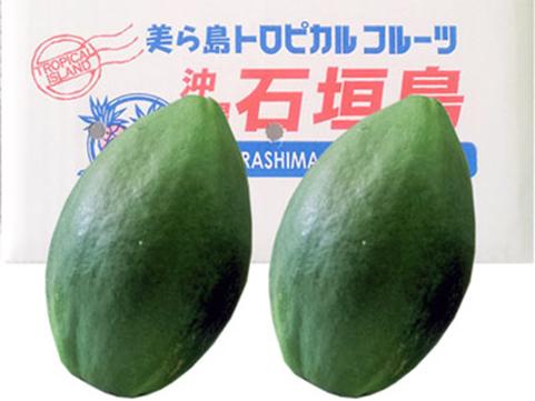 【 九旬直送便 】<br>沖縄・石垣島産青パパイヤ 1kg