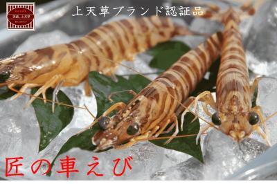 【 九州探検隊×九旬直送便 】<br>熊本・上天草 匠の大きな車えび