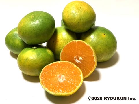 宮崎・日南「緑の里りょうくん」にちなんみかん 5kg